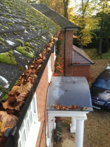 Moss and leaves in gutter